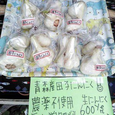 青森産ニンニクで有名な町、田子で育った農薬不使用、無化学肥料の ホワイト6片。