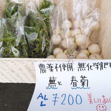 朝採れ春菊と蕪お店に出しました。