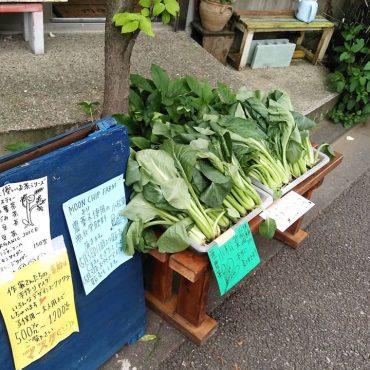 小松菜絶対美味しいです❗