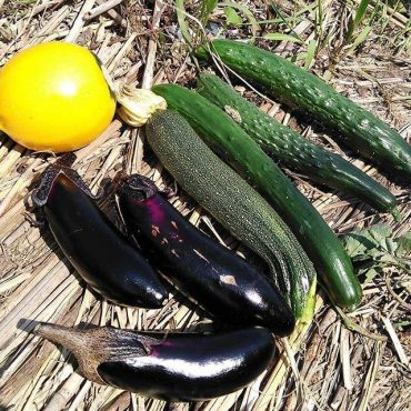 7/15(日)明日下北沢ピュアロードで野菜売ります‼